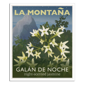 GALÁN DE NOCHE-poster