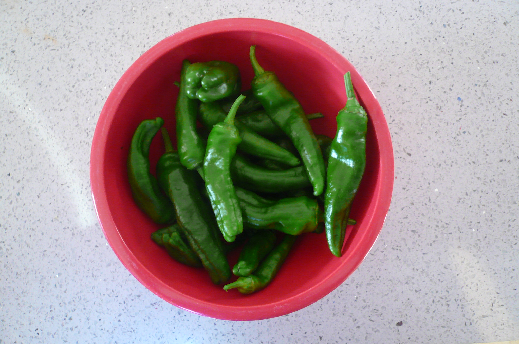 One of many Pimientos de Padrón crops